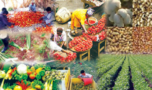 Nigeria Exports N4.9bn Worth Of Goods In Six Months