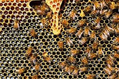 Nigeria To Start Bee Export By 2018