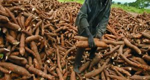 How To Start Cassava Farming And Processing Business For Export