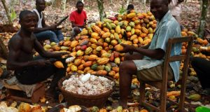 Cocoa: How To Exploit The Huge Global Market For Chocolate Products