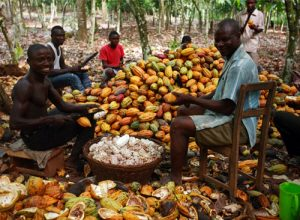 Cocoa: Exploring The Huge Global Market For Chocolate Products