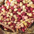 How To Start Kola Nut Export Business