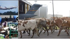 Aviation Safety:Cows Inimical To Airport Runways
