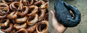 Starting Dried And Smoked Fish Export Business