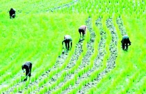 Govt to empower 10,000 rice, cassava farmers with N2.5bn