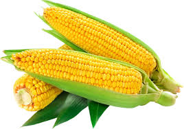 Starting Maize Production And Export From Nigeria