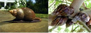 How To Maximize Snail Farming For Export