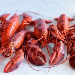 How To Run A Lobster Farm For Export
