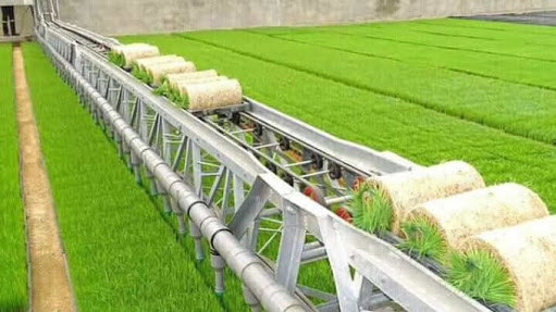 Six million Nigerians join rice producers, says FG