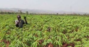Agricultural Council Unveils Technology To Reduce Sale Of Fake Seeds