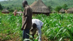 U.S. invests N8.6 billion to boost small-scale farming in Nigeria