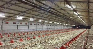 Managing Heat Stress In Poultry, Other Livestock Farms