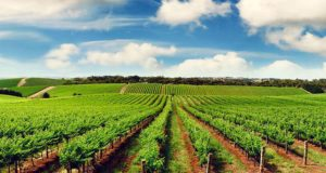 Nigeria's rice production gap now 500,000MT, says FG