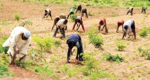 CBN targets 70,000 farmers under anchor borrowers' scheme in Borno