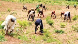 CBN disburses N611.5bn to commercial farmers