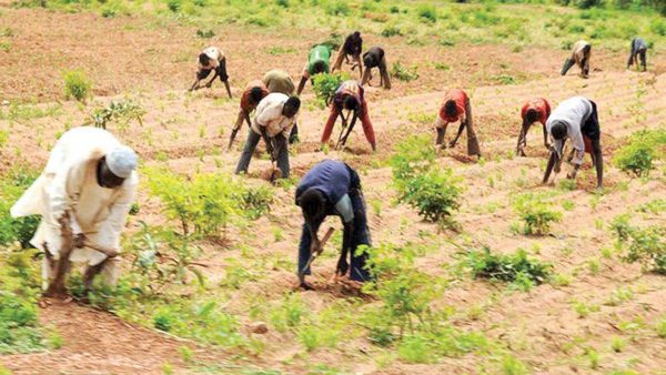 CBN disburses N539.8m loans to farmers in three months