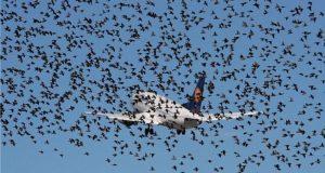 Bird Strikes: Managing The Aerodrome