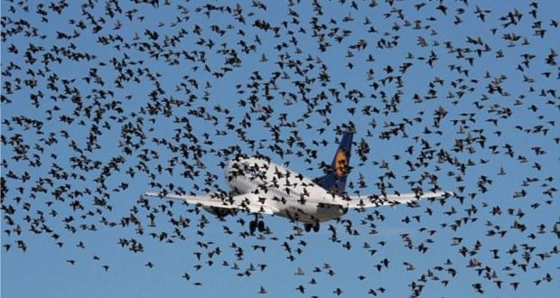 How Airplanes Can Minimize Bird Strikes