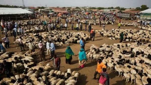How Livestock, Fish Farmers Can Survive Lockdown