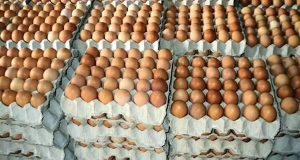 How To Operate Egg Logistics Business In Nigeria