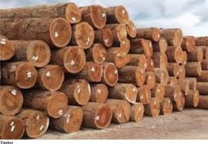 How To Export Charcoal And Timber From Nigeria