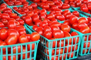 AgriBusiness: How To Manage A Successful Tomato Export Business