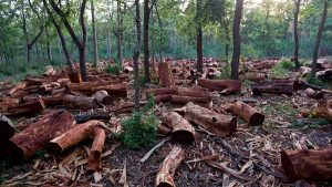 Replanting: Managing Nigerian Forests