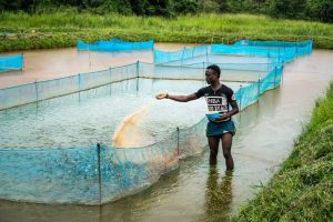 How To Start a Successful Fish Farming Business in Nigeria