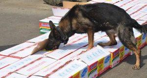 BULLS: Sniper Dogs @Ports