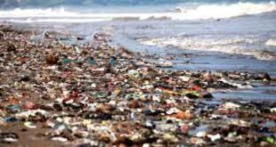 Roles Of International Organisations In Preventing Pollution Of Seas- IMO Example