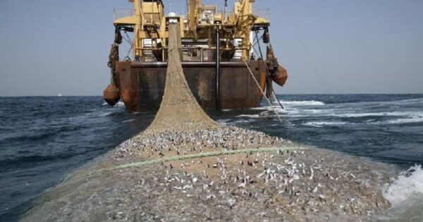 Illegal Fishing: How Nigeria Could Stop $70m Annual Losses
